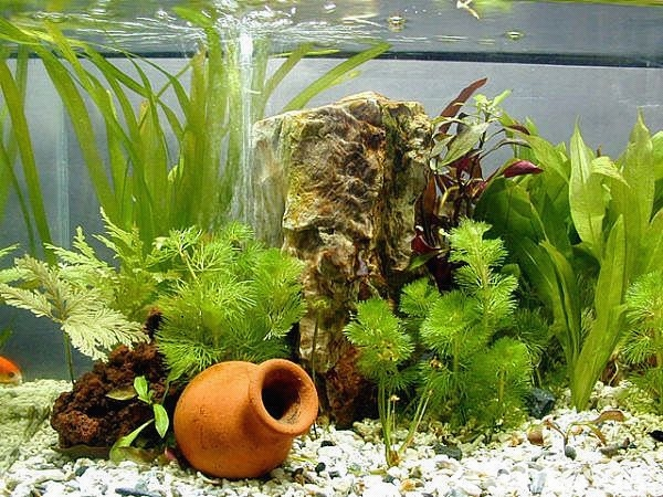 aquarium installation and maintenance