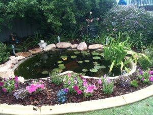fish pond maintenance