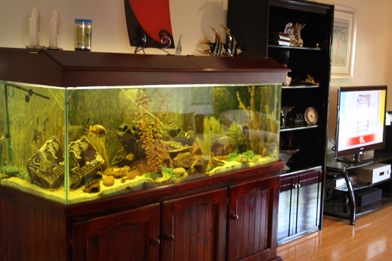 Fish Tank Cleaning in Perth - Get Wet Ponds