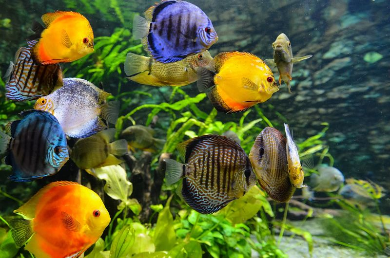 freshwater aquarium maintenance